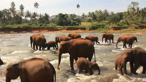 Elephants River Stock Video Footage