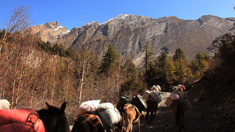 Transportation of goods on mules in Himalayas Stock Video Footage