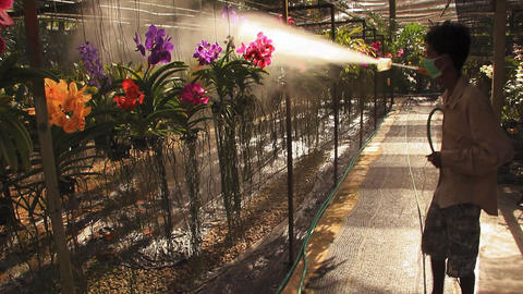Man Sprays Water On Orchids stock footage