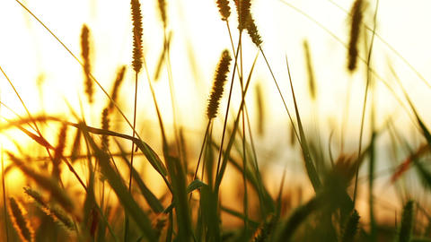 Background with wild grass and sunlight Stock Video Footage