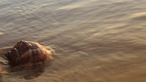 Seashell on the golden sand Stock Video Footage