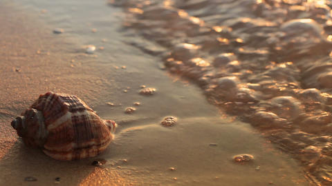 Seashell on the golden sand Stock Video Footage