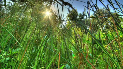 Insects In The Morning Grass. HDR Timelapse Footage