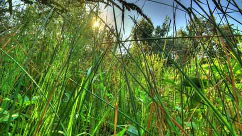 Insects In The Morning Grass. HDR Timelapse Stock Video Footage
