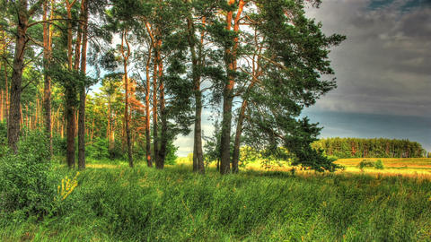 Green Forest. HDR Timelapse Shot Motorized Slider Stock Video Footage
