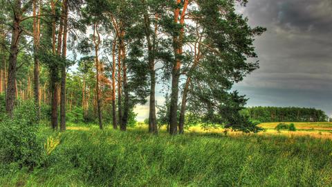 Green Forest. HDR Timelapse Shot Motorized Slider Footage