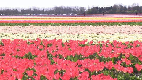 Field Multicolored Flowers Stock Video Footage