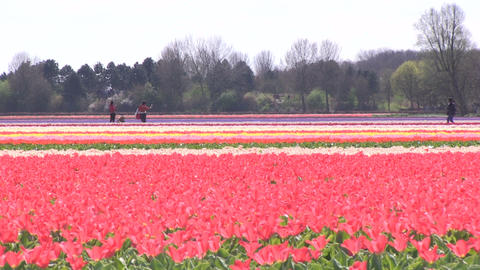 Field of Flowers Footage