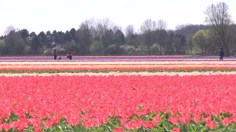 Field of Flowers Stock Video Footage
