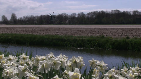 Flowers, canal and windmill Stock Video Footage