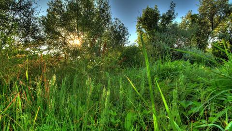 4k. Sunrise Meadow. HDR Timelapse Shot Motorized S Stock Video Footage