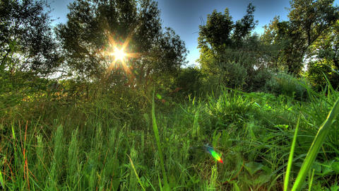 4k. Sunrise Meadow. HDR Timelapse Shot Motorized S Footage