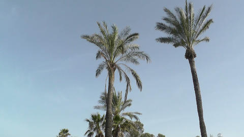 Palms in the blue sky Footage