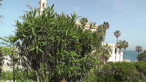 Tree in front of St. Peters Church Jaffa Tel Aviv Stock Video Footage