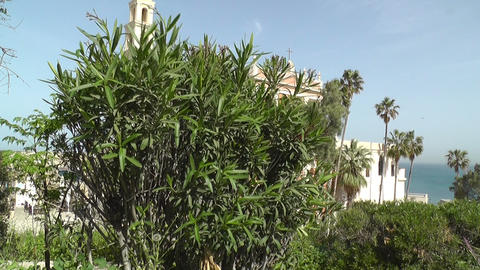 Tree in front of St. Peters Church Jaffa Tel Aviv  Footage