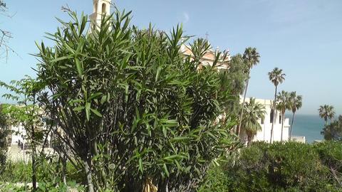 Tree in front of St. Peters Church Jaffa Tel Aviv Stock Video Footage