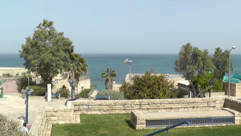 Trees On Sea Shore In Jaffa stock footage