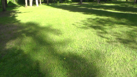 Green trees in park Stock Video Footage