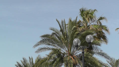 Palm trees in blue sky Stock Video Footage