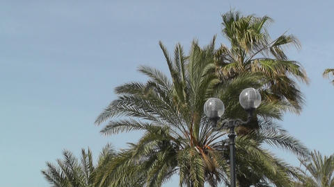 Palm trees in blue sky Footage