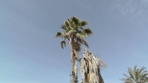 Palm tree in blue sky Stock Video Footage