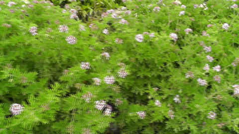 Young shoots of flowers at the roadside paths Stock Video Footage