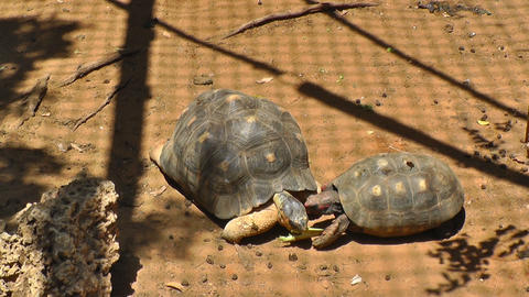 The turtles eating food Stock Video Footage
