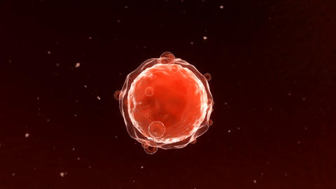 Oocyte_009 Animation