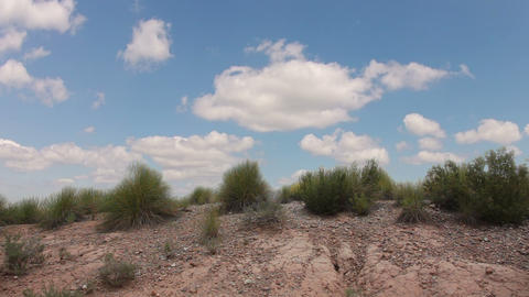 Grass in the desert and clouds Stock Video Footage
