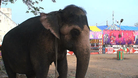 Elephant in front of a circus Footage