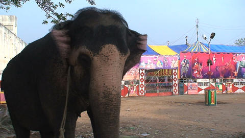Elephant in front of a circus Stock Video Footage