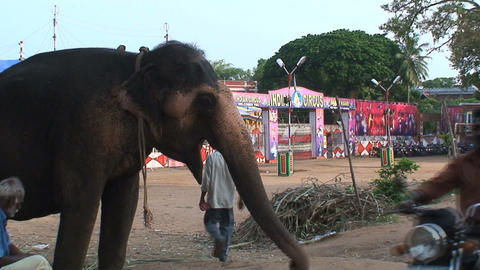 People walking and driving around a circus elephan Stock Video Footage