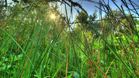4k. Insects In The Morning Grass. HDR Timelapse Stock Video Footage