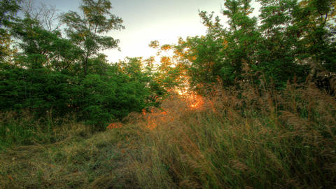 4k. Forest At Dawn. HDR Timelapse Shot Motorized S Footage