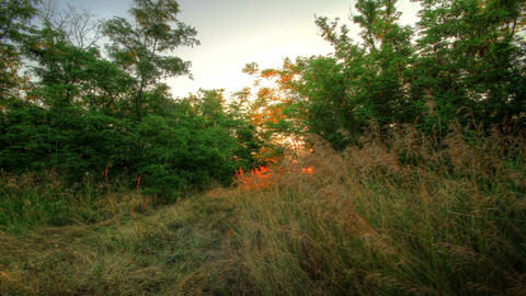 4k. Forest At Dawn. HDR Timelapse Shot Motorized S Stock Video Footage