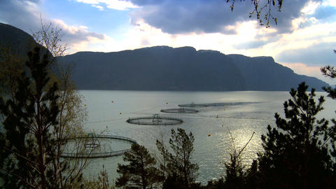 Floating nets of a salmon farm on a nordic fjord Footage