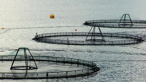 Floating nets of a salmon farm on a glacial fjord Stock Video Footage