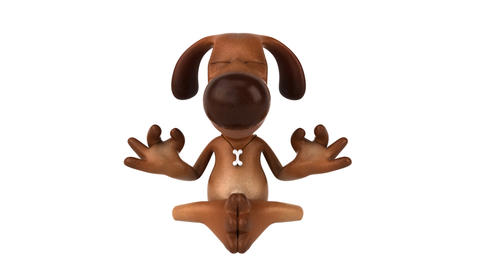 zen dog HD Stock Video Footage