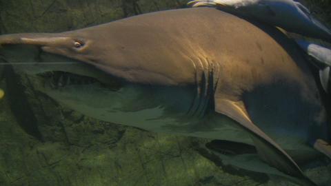 Shark Footage