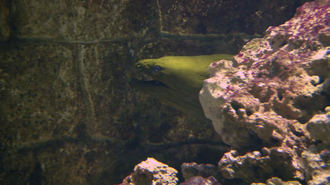 moray 01 Stock Video Footage