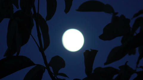 Moon in tree 1 Stock Video Footage