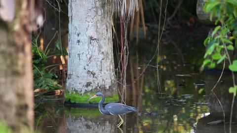 swamp Stock Video Footage