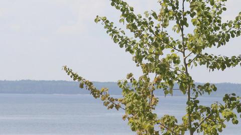poplar on the seashore Stock Video Footage