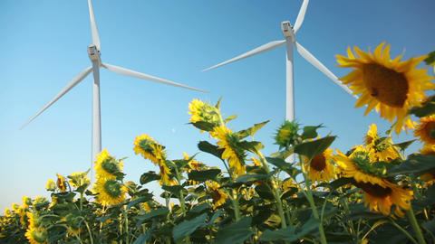 Sunflowers and wind power Footage