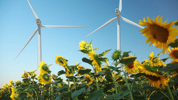 Sunflowers and wind power Stock Video Footage