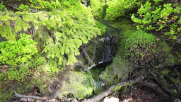 stream in the wood Stock Video Footage