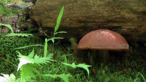 mushroom 0 A 0 Stock Video Footage