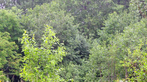 summer warm rain 2 Stock Video Footage