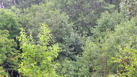 summer warm rain 2 Footage
