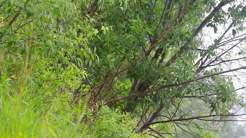 summer warm rain 4 Stock Video Footage